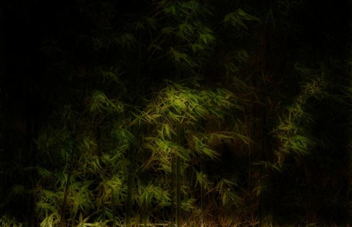 Bamboo at Night