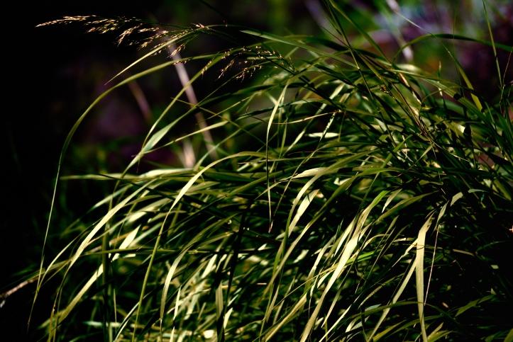 grass-srgb